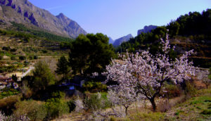 Almond blossom and the Penyon del Diví.